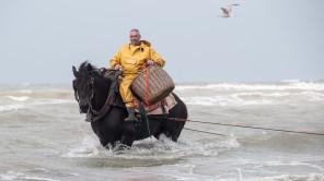 Bild: Krabbenfischer in der Nordsee in Belgien