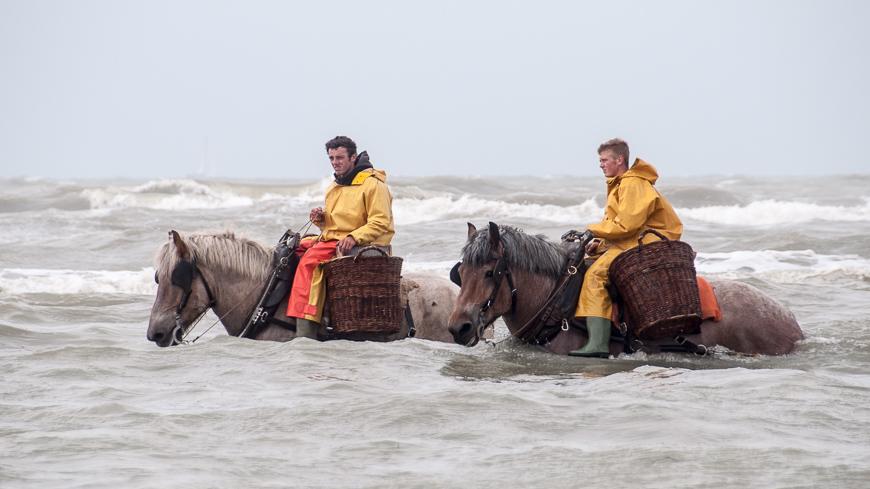 Bild: Krabbenfischer in der Nordsee