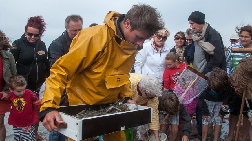 Bild: Krabbenfischer in Oostduinkerke sortiert den Fang