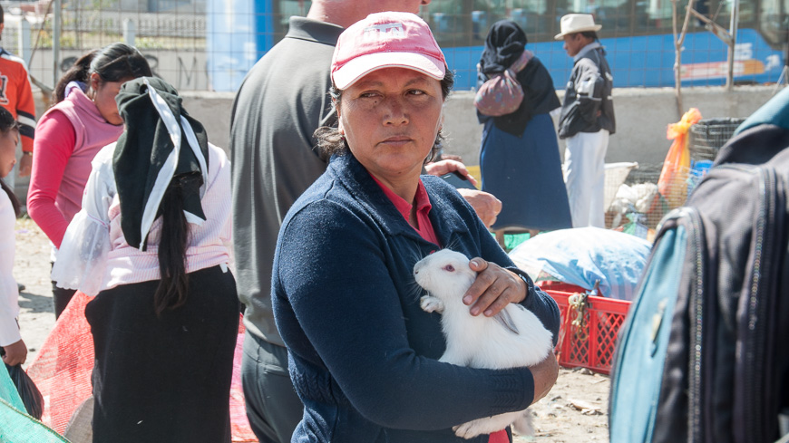 Bild: Hase am Tiermarkt Otavalo, Ecuador