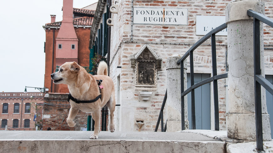 Bild: Hund Fondamenta Rughetta Dorsoduro