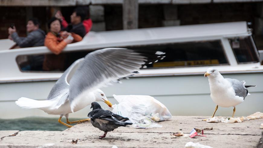 Bild: Vögel in Venedig