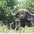 Bild: Tierisches Südafrika (Bild: South African Tourism)