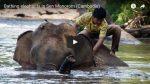 [Audio-Slideshow] Elefanten beim baden in Sen Monorom