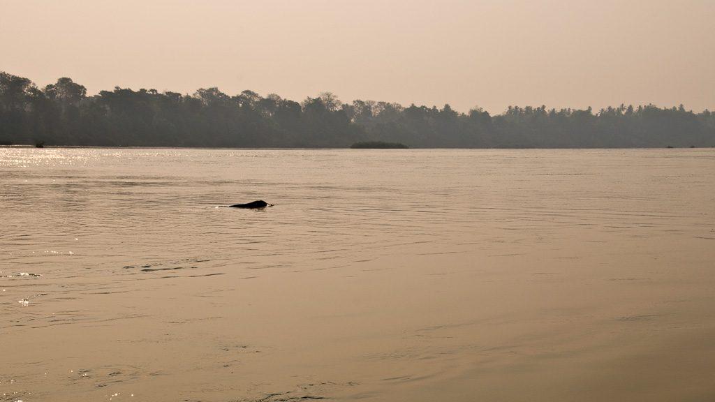 Delfinbeobachtung der Irawaddydelfine im Mekong