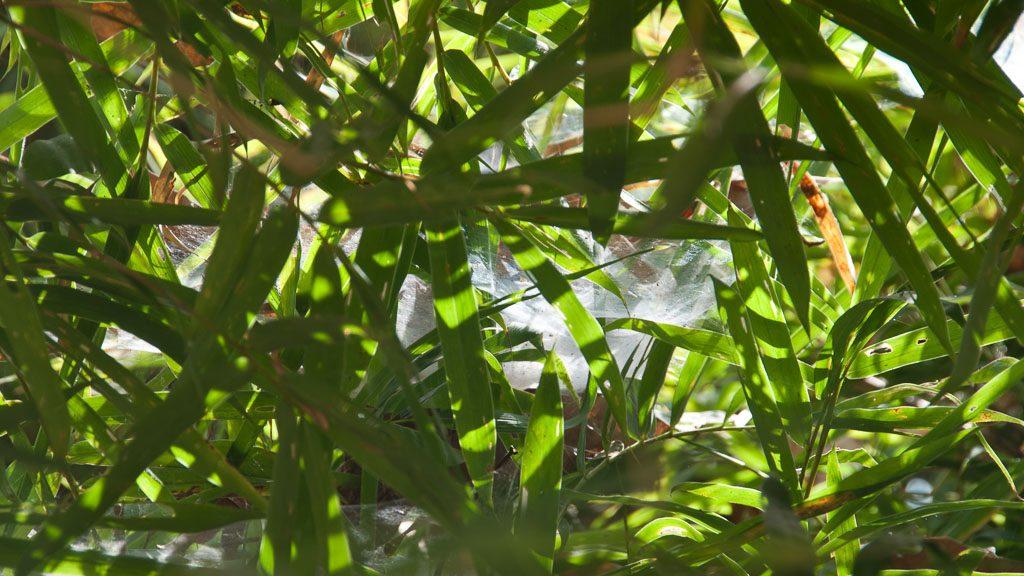 Dschungel-Weg rund um den Yeak Laom See