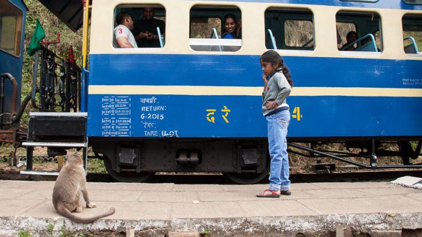 Hillgrove: Affen beim Halt der Nilgiri Mountain Railway