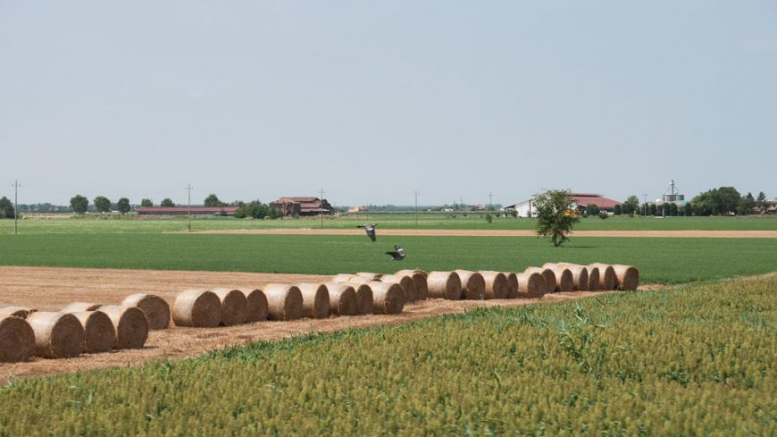 Felder in der Poebene