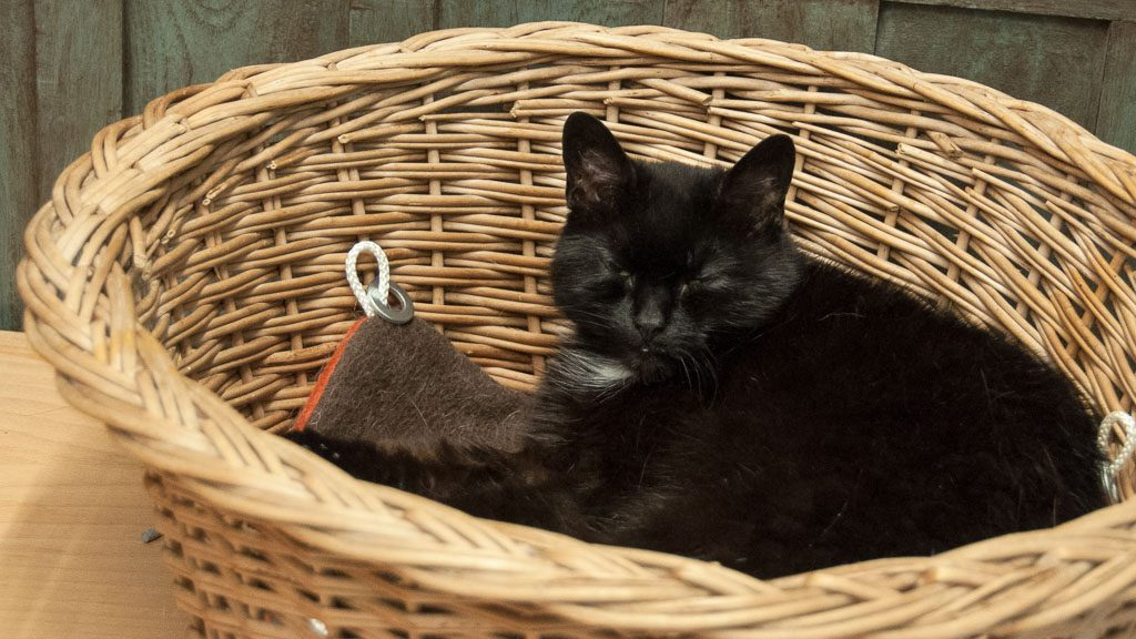 Deamcatchers Gent: Katze Aqua im Körbchen