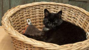 #Catcontent zum Streicheln im Katzencafé in Gent