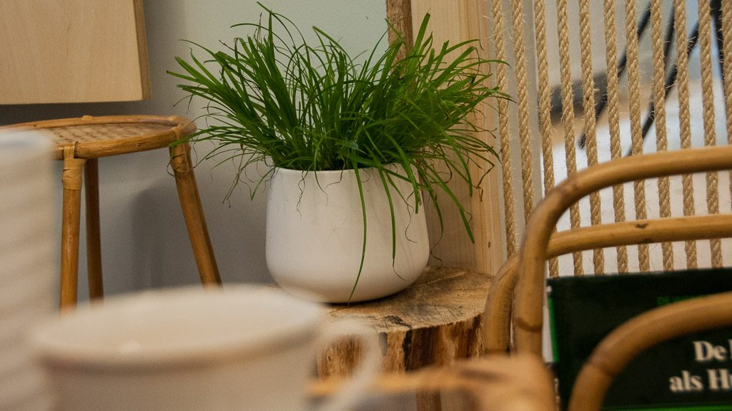 DreamCATchers Katzencafé in Gent: Kaffeetasse und Katzengras
