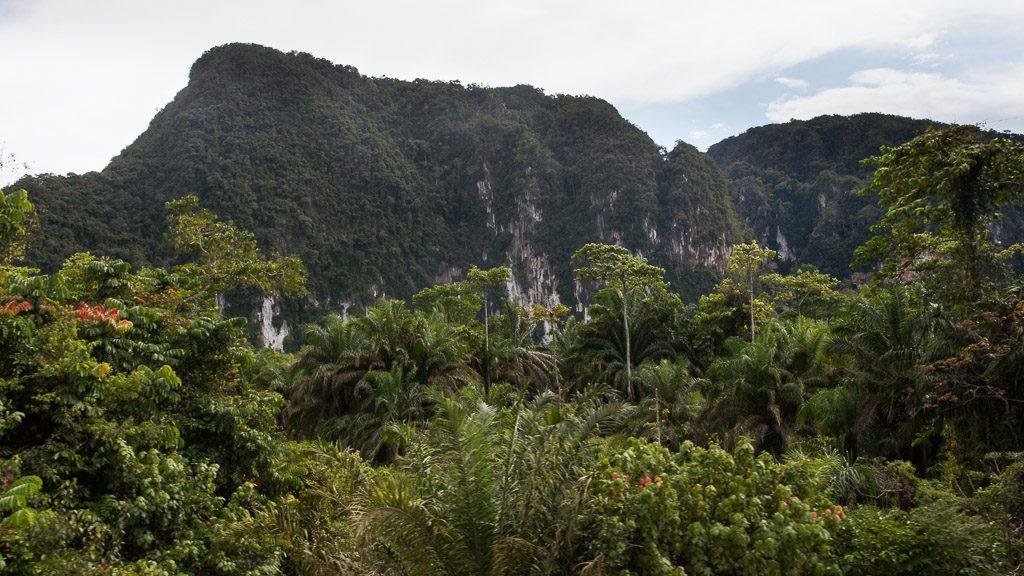 Dschungel-Eisenbahn in Malaysia