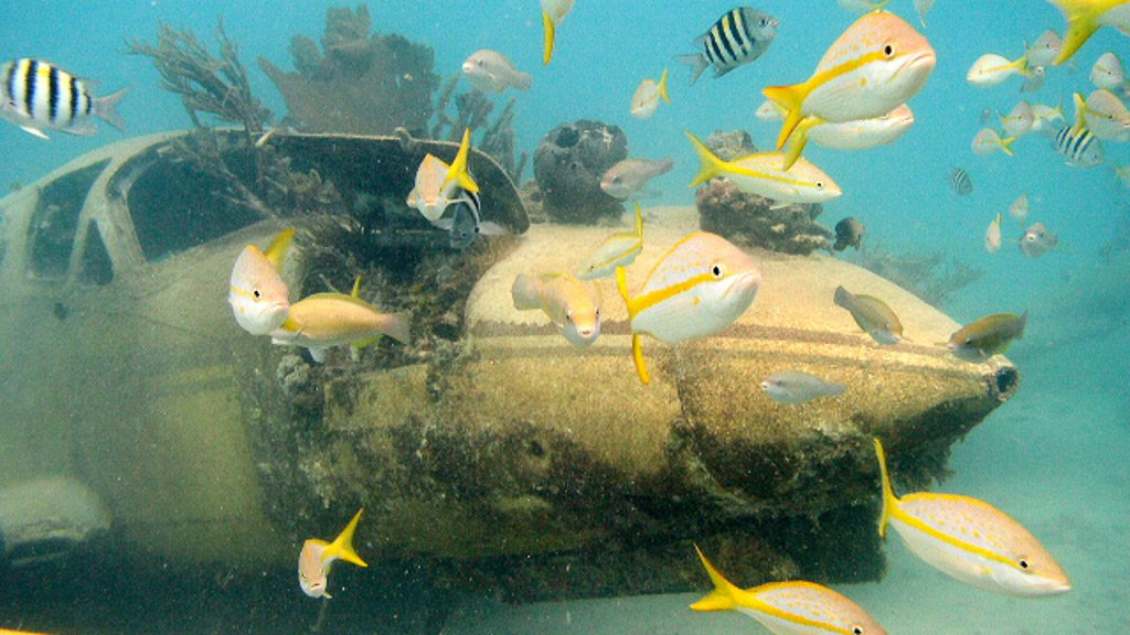 Tauchplatz Planewreck - Bild: (c) Aruba Thourism Authority