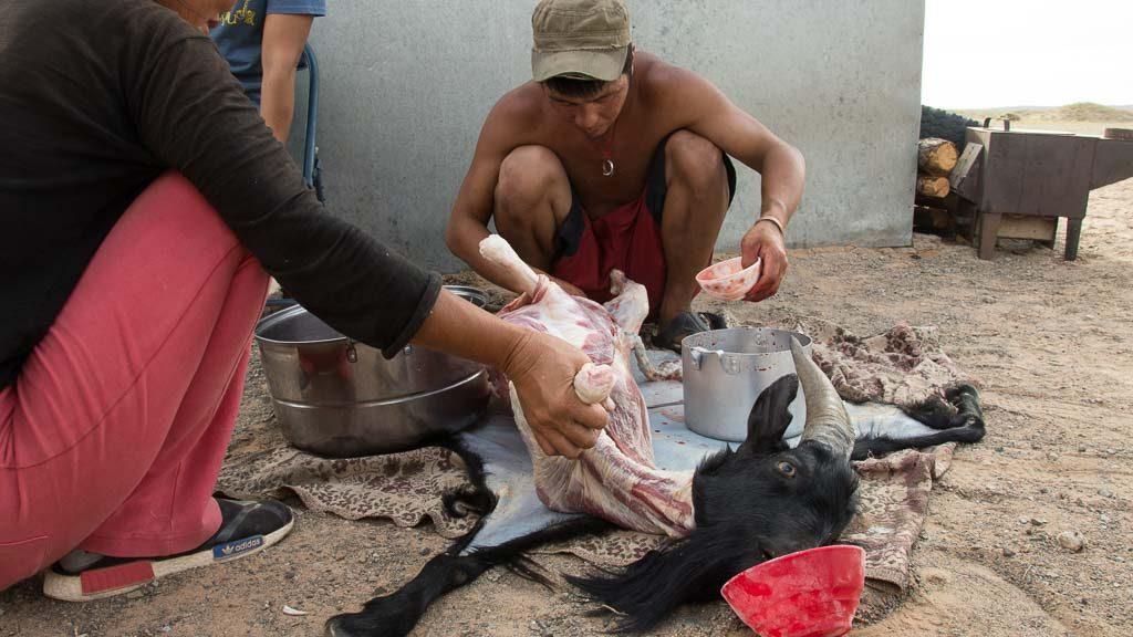 Nomaden schlachten Ziege