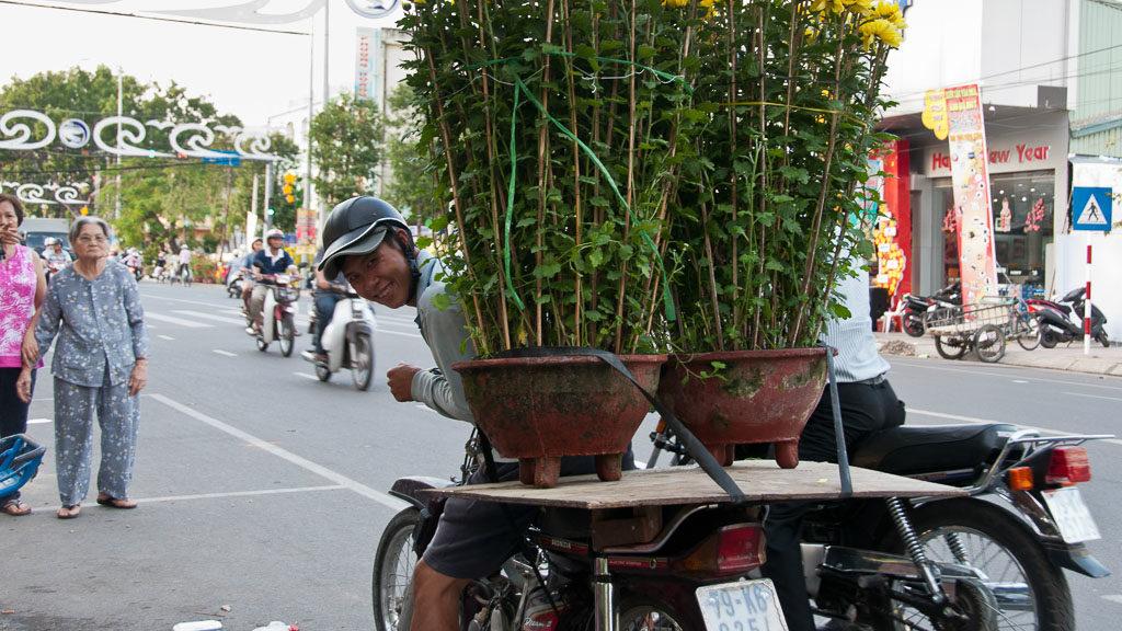 Moped mit riesigen Blumentöpfen in Vietnam