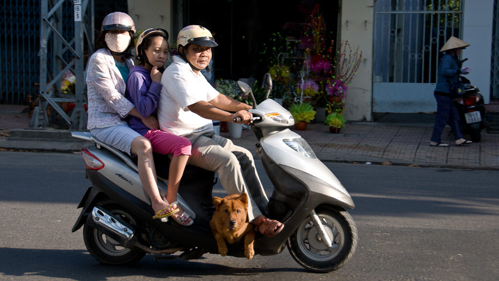 Hund am Moped in Vietnam