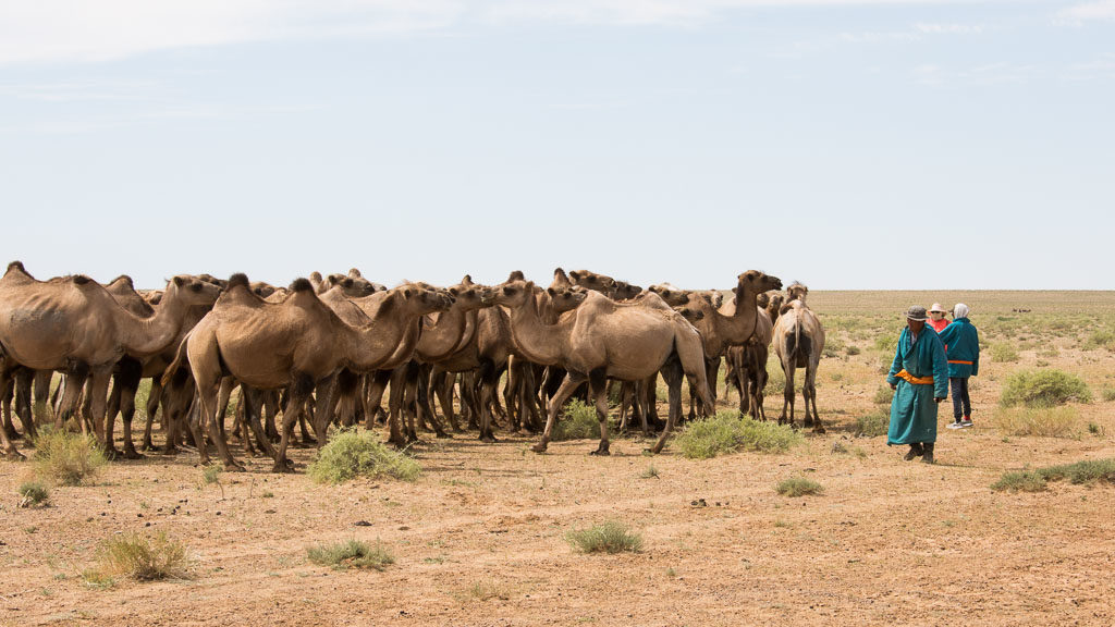 Hirte mit Kamelen