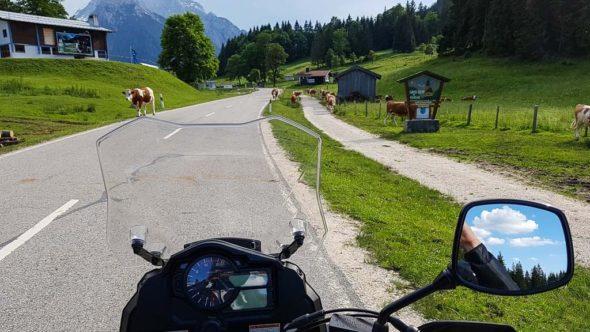 Kühe bei der Motorradtour durchs Berchtesgadener Land am Schwarzeck