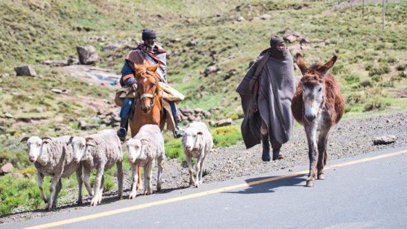 Hirten in Lesotho