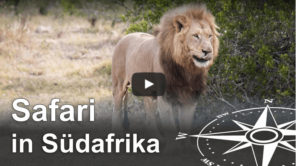 Safari Südafrika - Big Five im Kariega Game Reserve Video