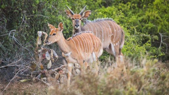 Tierfotos während einer Safari in Südafrika