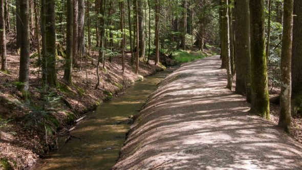 Schwellsteig im Nationalpark Bayerischer Wald