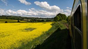 Bild: Rapsfeld in Südböhmen vom Zug aus gesehen