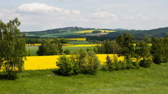 Bild: Rapsfelder in Südböhmen - Tschechien
