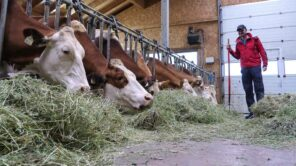 Vom Schlechtwetter überrascht: Schöne Erlebnisse beim Urlaub am Bauernhof bei Regen - mit Video